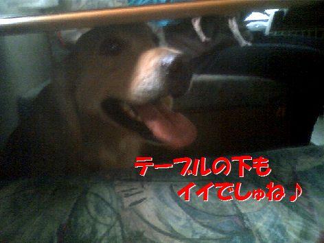 i_20111120093803.jpg