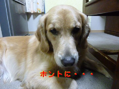 i_20111203104347.jpg