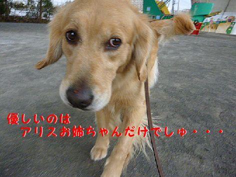 i_20120124080249.jpg