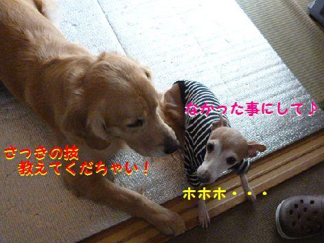 i_20120131071455.jpg