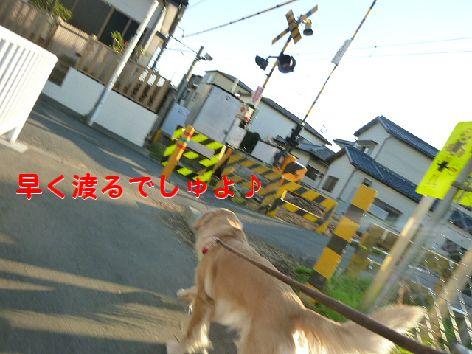 j_20111214073300.jpg