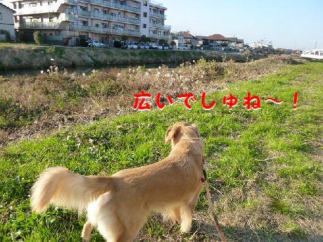 k_20111214073300.jpg