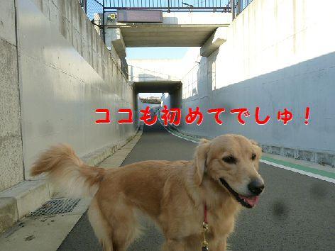 l_20111214073300.jpg