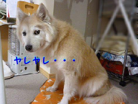 z1_20120121084038.jpg
