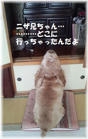 3日ニザ兄ちゃんナムナムブログ