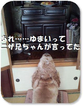 3日ニザ兄ちゃんナムナム…?