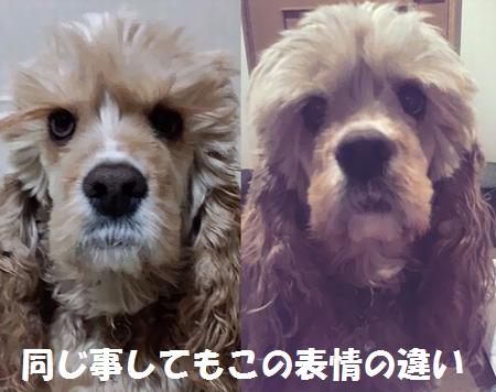 同じ事してもこんなに違う表情