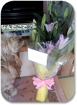 12日リリィの花束全体