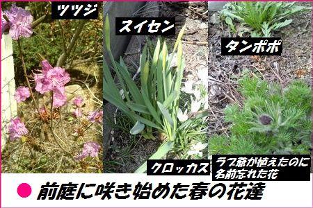 5月1日春の花達ブログ