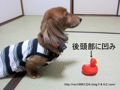 004_20120226200658.jpg