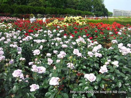 022_20120528055004.jpg