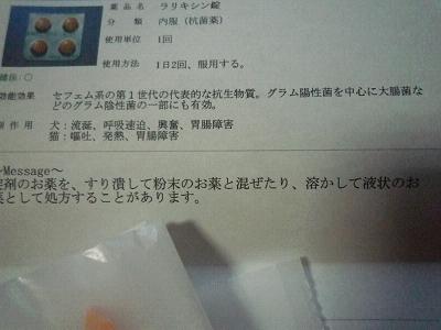 P1020213s.jpg