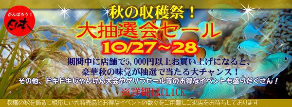 banner_2012shukakusai-thumbnail2.jpg