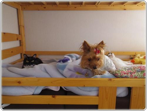 娘の家の猫たちIMGP1089-20140916