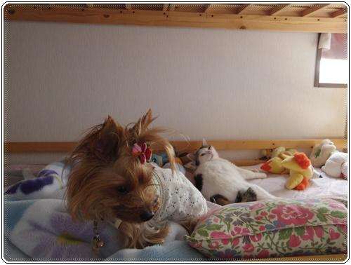娘の家の猫たちIMGP1090-20140916
