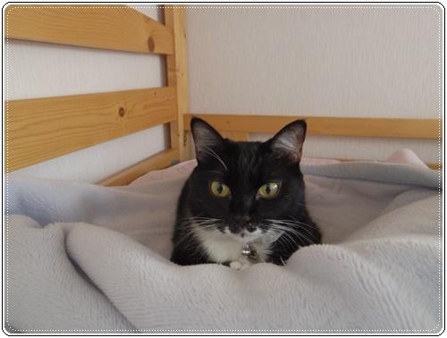 娘の家の猫たちIMGP1091-20140916