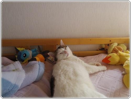 娘の家の猫たちIMGP1092-20140916