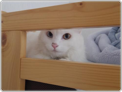 娘の家の猫たちIMGP1094-20140916