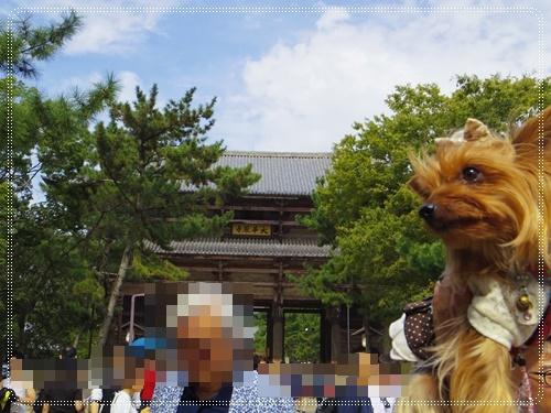 東大寺IMGP1283-20141011