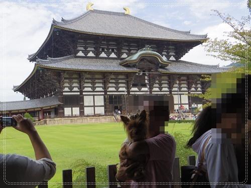 東大寺IMGP1291-20141011