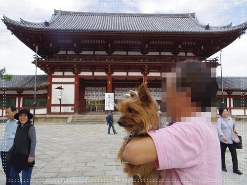 東大寺IMGP1289-20141011