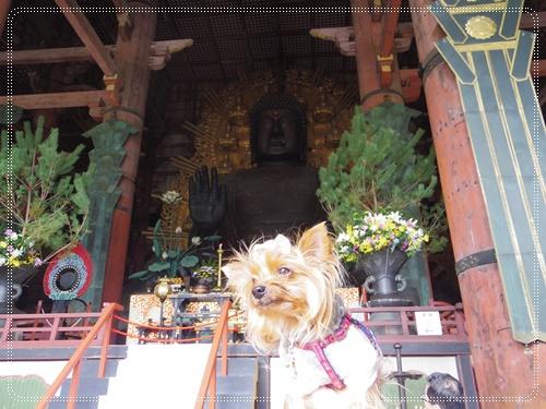 東大寺IMGP1301-20141011