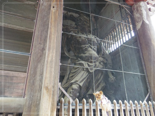 東大寺IMGP1329-20141011