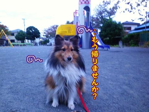 003_20121118070128.jpg