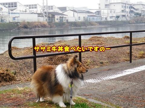 20120318_1_1.jpg