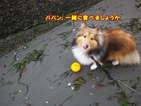 20120318_1_11.jpg