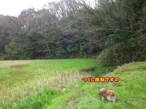 20120401_1_9.jpg