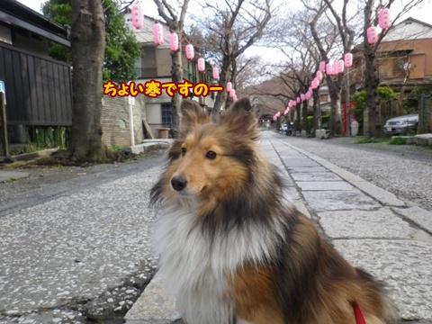 20120401_5.jpg