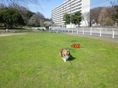 20120408_1_9.jpg