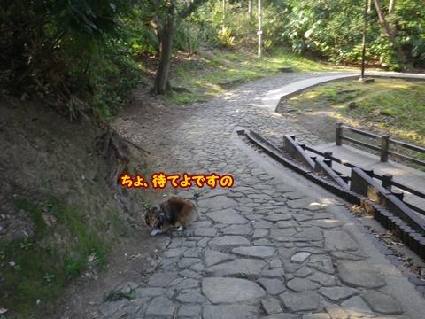 20120408_5.jpg