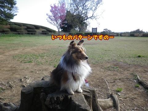 20120408_9.jpg