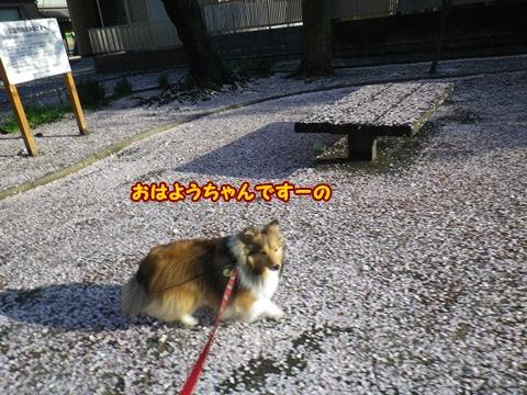 20120415_1.jpg