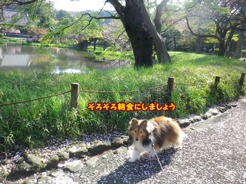 20120415_11.jpg