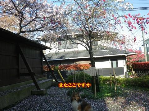 20120415_7.jpg