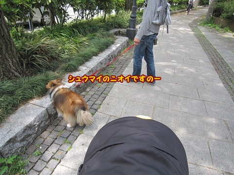 20120428_5.jpg