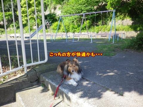 20120513_5.jpg