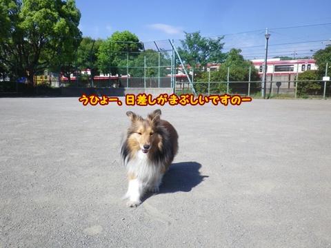 20120513_7.jpg
