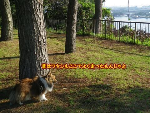 20120519_1_4_20120520102459.jpg
