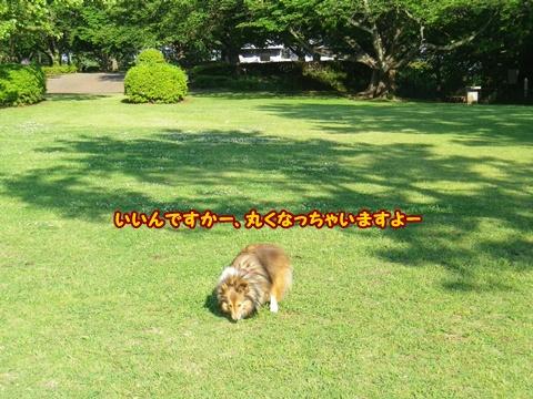 20120519_1_6.jpg