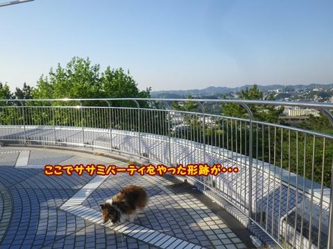 20120519_9.jpg