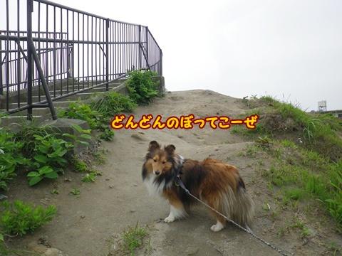 20120520_1_1.jpg