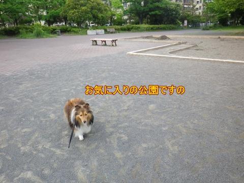 20120520_2.jpg