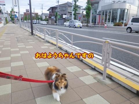 20120610_1.jpg