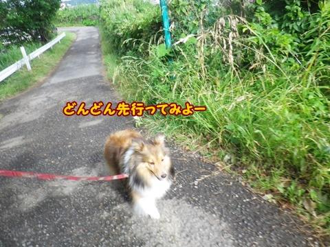 20120610_1_11.jpg