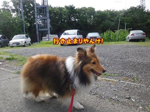 20120610_1_12.jpg