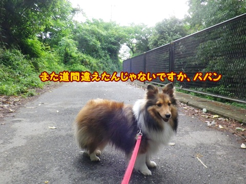 20120610_1_7.jpg